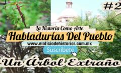 Un Árbol Extraño - Leyenda Del Árbol De Las Espinas En Forma De Cruz  – El Oficio de Historiar – Ahora en YouTube…