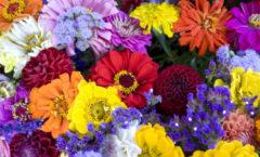 Reconstruyen el retrato del ancestro de las flores modernas