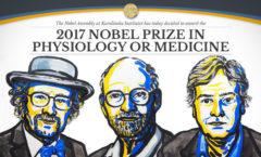 Tres estadunidenses ganan el Nobel de Medicina por sus trabajos sobre el reloj biológico