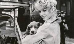 """Brigitte Bardot publica un """"libro testamento"""""""