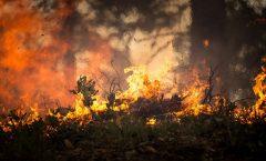 Incendio en la Sierra Gorda