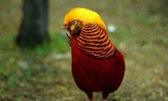 Tres mil millones de aves se han perdido en los últimos 50 años en norteamérica