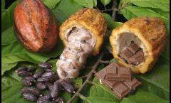 Viaje al origen del chocolate