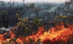 La Amazonia, interpela a los obispos mexicanos