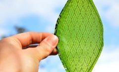 Hoja artificial imita la fotosíntesis