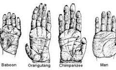 La evolución de la mano humana