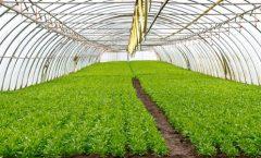 La agricultura industrial