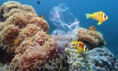 Materia de oceanos es vital