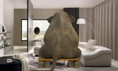 """""""El elefante en la habitación"""""""