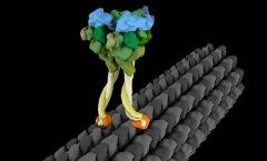 """""""Caminar"""" dentro de las células"""