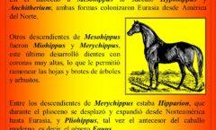 La India lugar de origen de los antecesores de los caballos