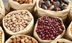 Certificar la calidad de la semilla de frijol