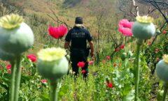 AMLO plantea sustituir plantíos de mariguana y amapola en Guerrero con 'Sembrando Vida'