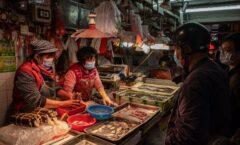 Científicos de la OMS viajarán a China para estudiar el origen del coronavirus
