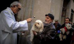 ¿Querías bendecir este domingo a tu mascota? Lo podrás hacer virtualmente