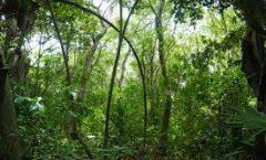 Selva Maya,