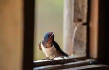 En la ventana con la golondrina
