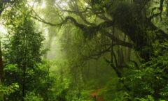 Los seres humanos han destruido dos tercios de la selva tropical del mundo