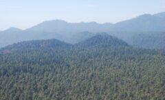 Bosques y selvas, amenazados por mineras, denuncian especialistas