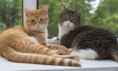 Usos del gato: Los hay meteorólogos, entomólogos, ornitólogos. Hay, en fin, gatos para todo.