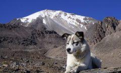 Citla, el perrito salvador en la montaña; ve sus historias