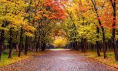 Hoy entra el otoño... y llega con frente frío